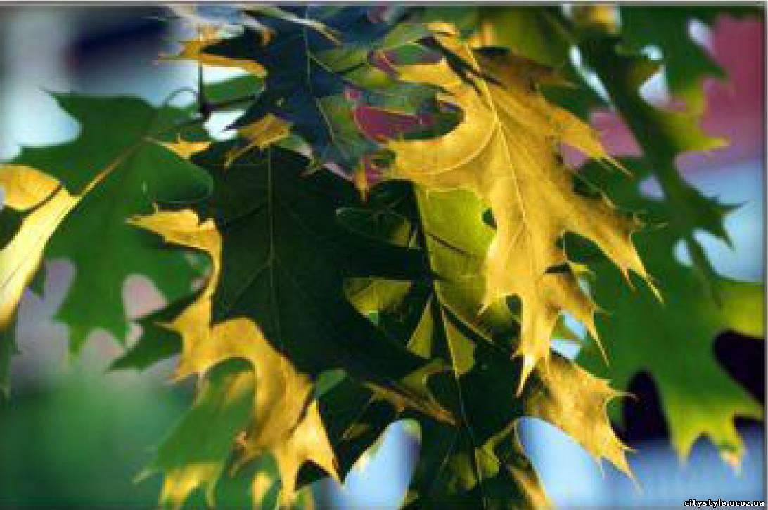 Форма листя дерев фото 5 фотография